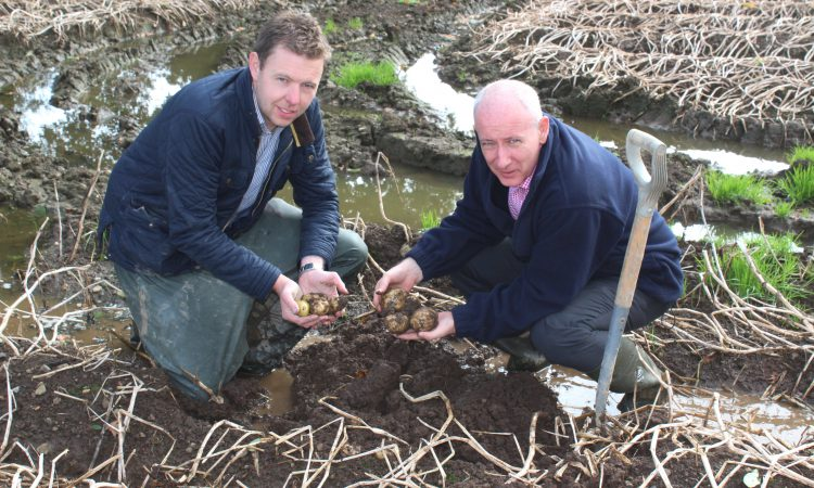 NI potato harvest: Unfinished business as up to 10% remains underground