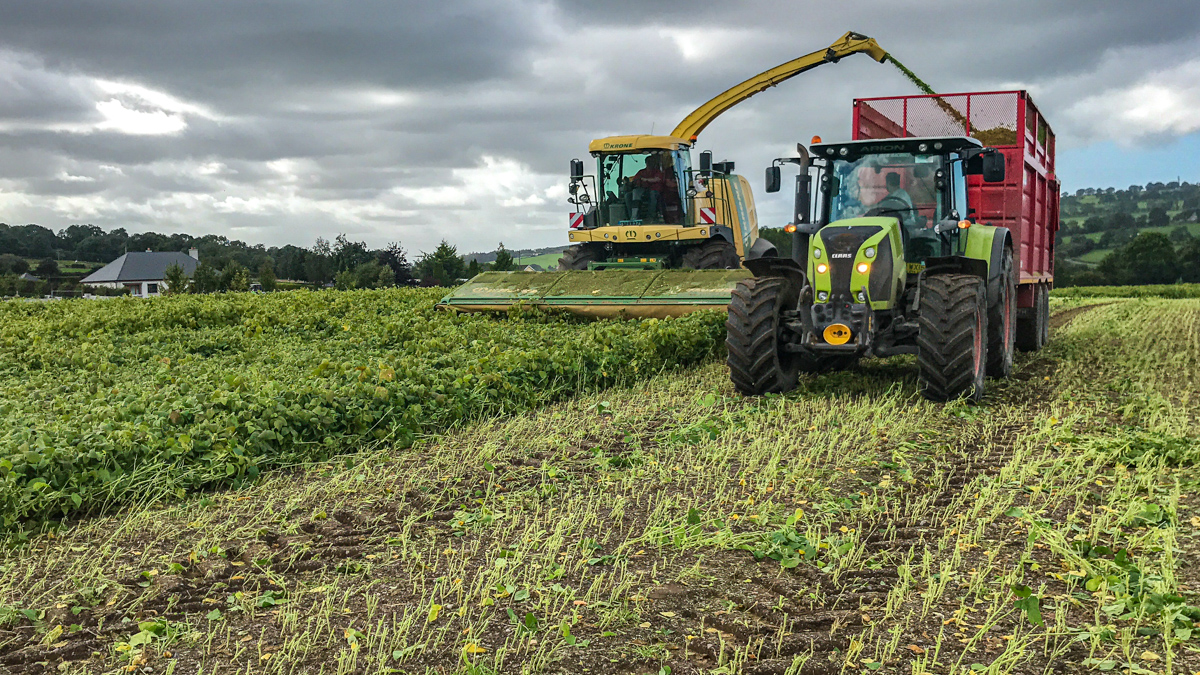 Look back: Wholecrop soybean harvest in Co. Wicklow
