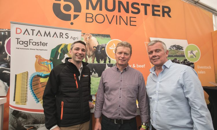 Datamars Agri partners with Munster Bovine to supply animal ID tags