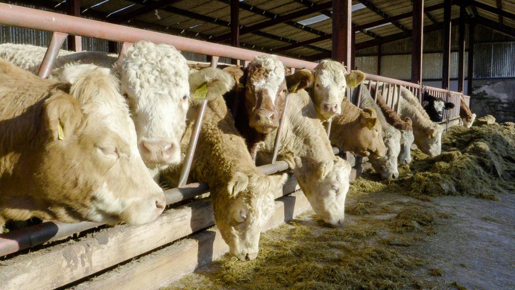 committee profiteering farmers TB prime cattle Manure