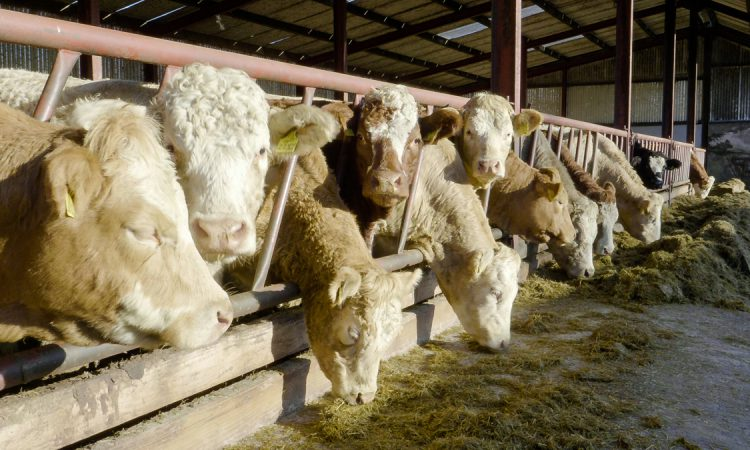 Beef trade: Factories battle to keep a lid on prices