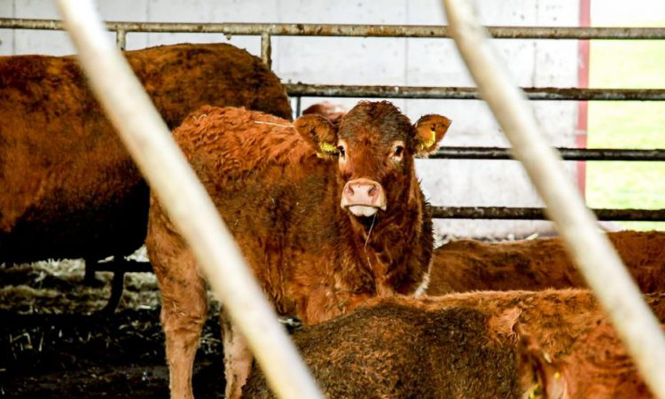 Letter to the editor: 'In-spec' requirements for cattle; right now we have no control; no say; and no choice