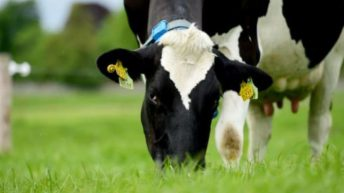 How can the EBI reduce our environmental impact on Irish dairy farms?