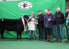 Video: Irish Angus Cattle Society to host top pedigree show and sale