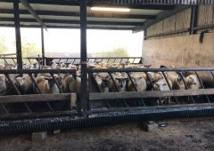 Getting ewe nutrition right in the pre-lambing period