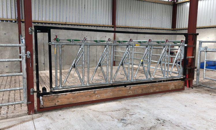 Do head-lock barriers make handling of cattle easier?