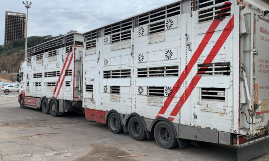 What does the Programme for Government say about live exports?