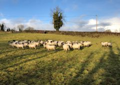 First Teagasc National Sheep Conference to take place on Tuesday