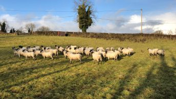 Grazing pastures this time of the year runs the risk of liver fluke