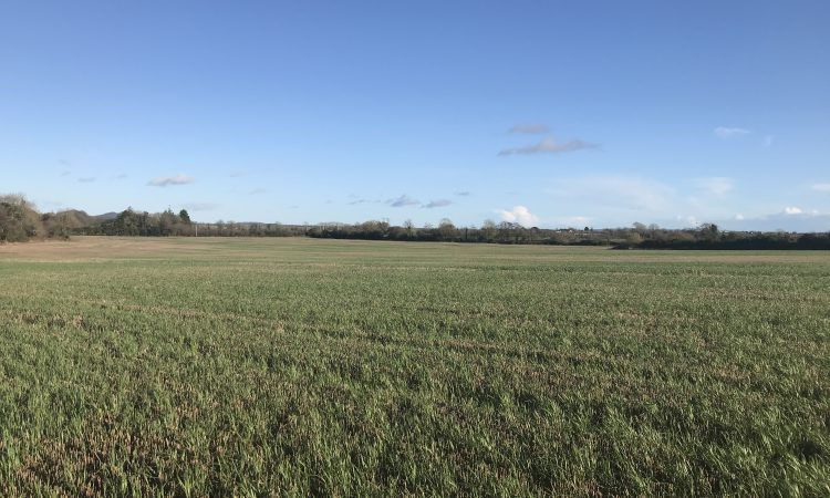 63ac roadside holding for sale at Campile, New Ross