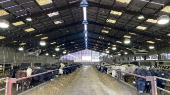 Inside a 4,600 head beef-finishing operation in the UK