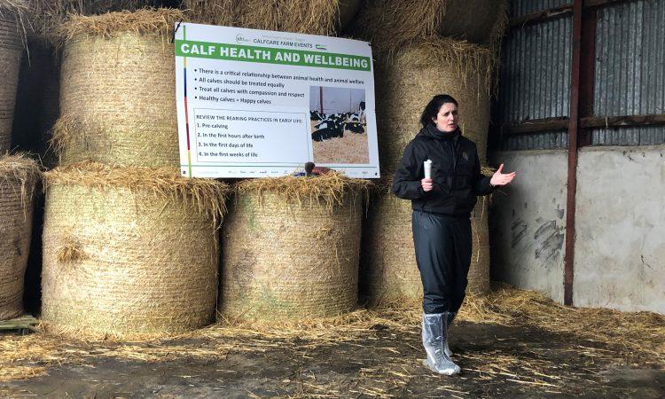 'Calf health is a good measure of calf welfare' on farms