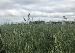 Department releases winter oats list for 2021 season