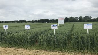 Recommended lists: Two new additions to spring wheat varieties