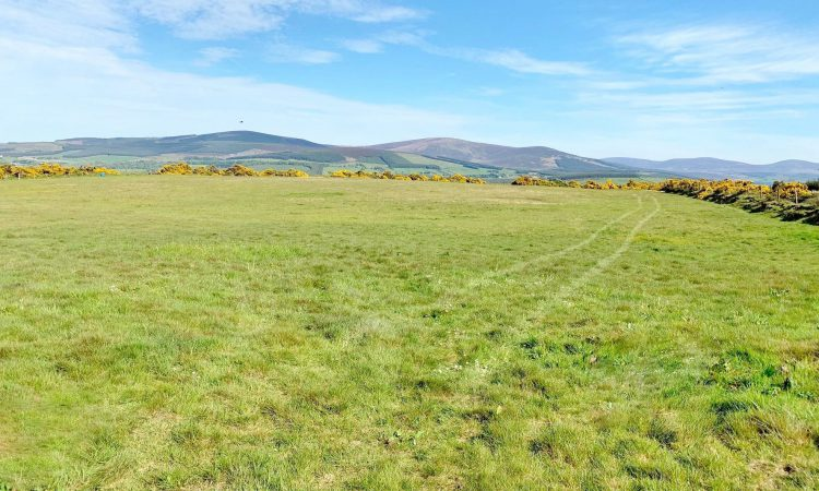 42ac farm for sale in '1 or 2 lots' on the Dublin/Kildare border