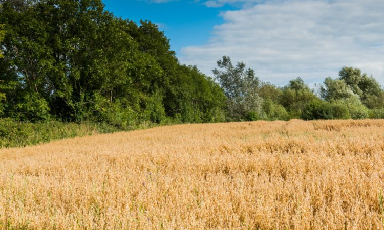 Agricultural output price index down 5% on May 2019 levels