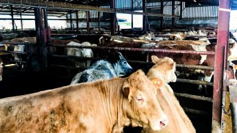 Beef trade: Factory prices slow to increase, but what about NI and UK trade?