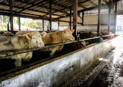 Beef trade: Factories managing to keep a cap on base quotes