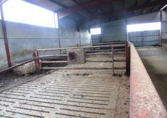 11 bullocks and 4 store cattle stolen from shed in Co. Laois