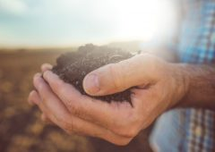 Get your soil right; the rest will follow