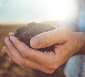 化肥可以减少土壤中的细菌数量
