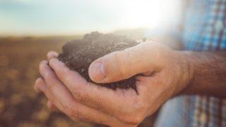Chemical fertilisers reduce the level of bacteria in soil