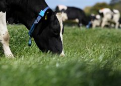 The 'climate-friendly cow': Halving methane emissions in UCD