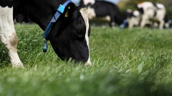 'Average' dairy flock climbs from 64 to 80 cows in a decade