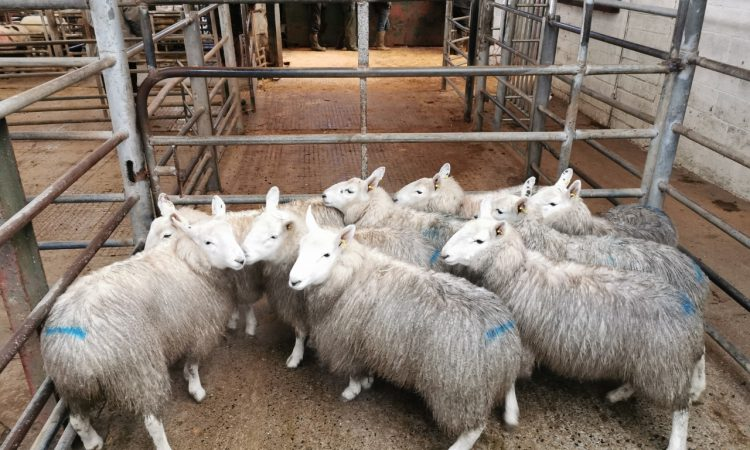 Sheep marts: Increasing factory prices driving the mart trade