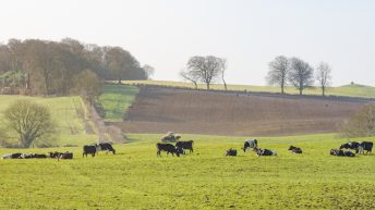 Annual review 2020: What's the outlook for dairy and beef?