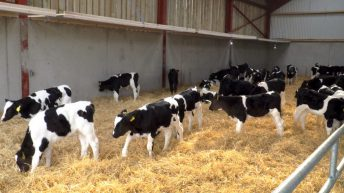 Calf Health Series: A farmer's one-stop shop for a successful calf-rearing period