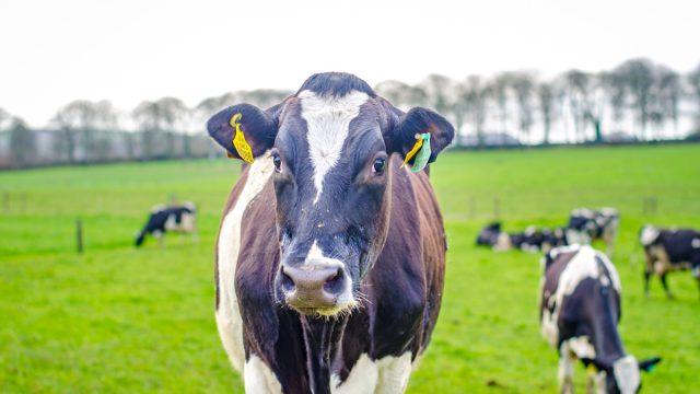 Dairy Gene Ireland programme: How successful has it been?