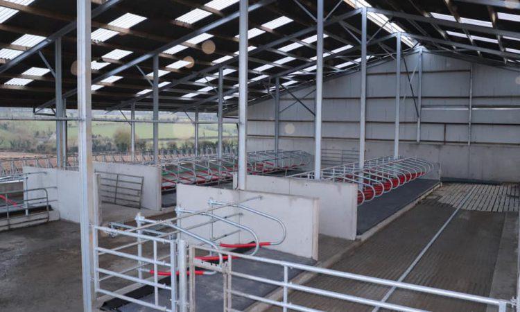 Buildings focus: Housing 60 head of suckler cows in a new cubicle shed in Co. Kildare