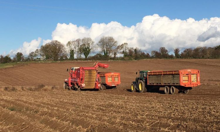 'Potato price needs to rise to ensure industry's future'