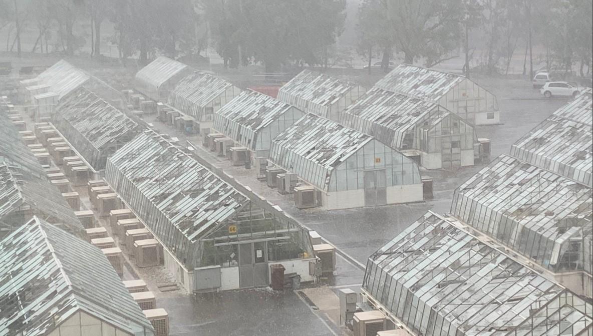 Huge hailstones batter Aussie agri research glasshouses