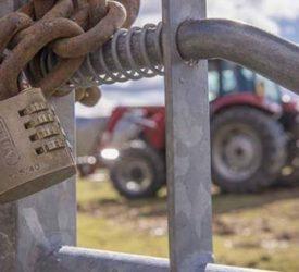 36 stolen calves returned to owner…after a month missing