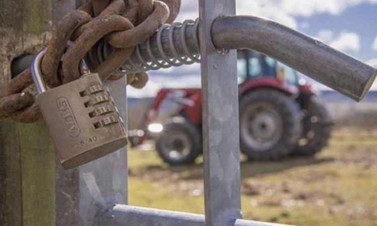 Livestock stolen from 2 farmyards in Longford