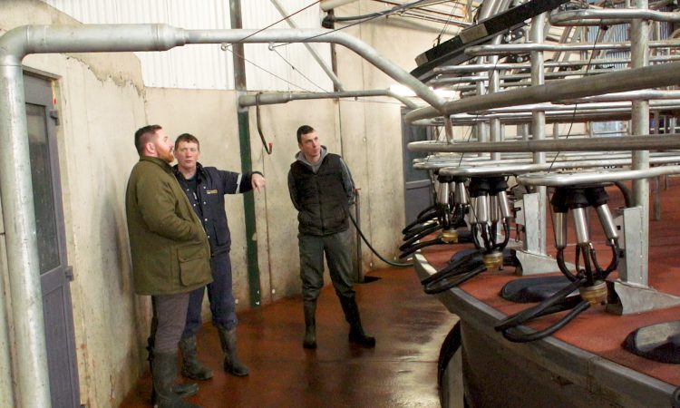 'George goes dairy farming': Calving down 200 cows in just 4 weeks in Co. Wexford