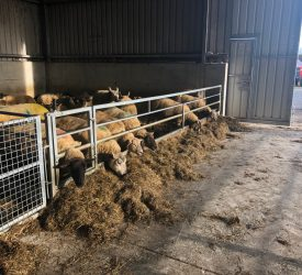 Why is it important to BCS ewes?
