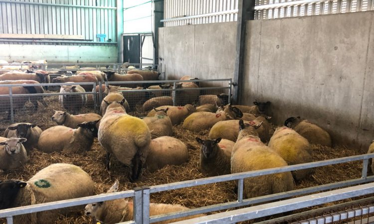 Lameness: What can farmers do about it?