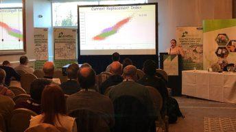 'How many lambs are too many?' – Sheep Ireland conference