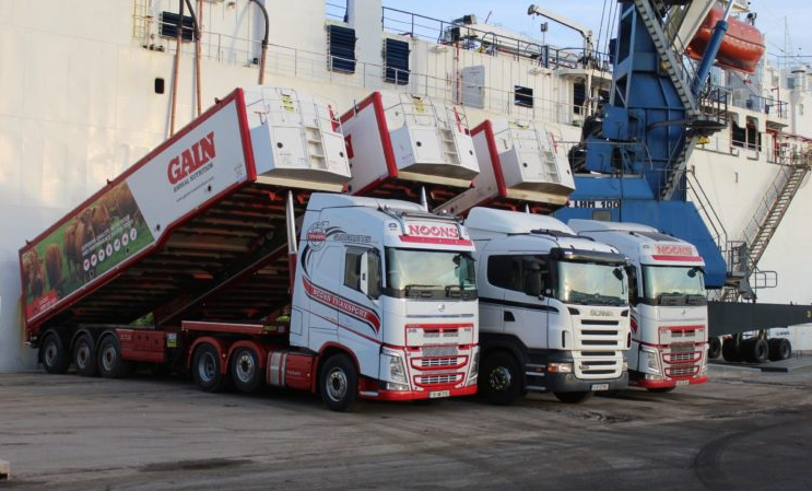 Exporter preparing consignment of bulls for Turkey