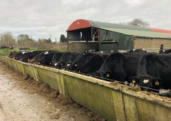 Dairy focus: One-third of the way through calving down 650 cows in Co. Meath