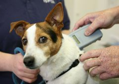 'Farmers legally entitled to shoot dogs in certain cases' – ISPCA