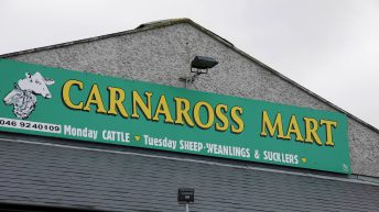 Prices: Successful first online calf sale at Carnaross Mart