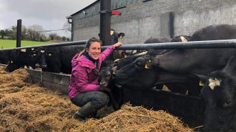 Dairy focus: First experience managing a 290-cow dairy farm in Co. Wexford