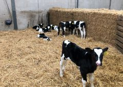 Gene Ireland Programme: Breed packs for 2021