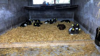 Have you ticked all the boxes when it comes to feeding your calves?