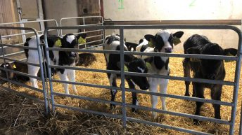 Poots announces change to NI calf TB testing requirements