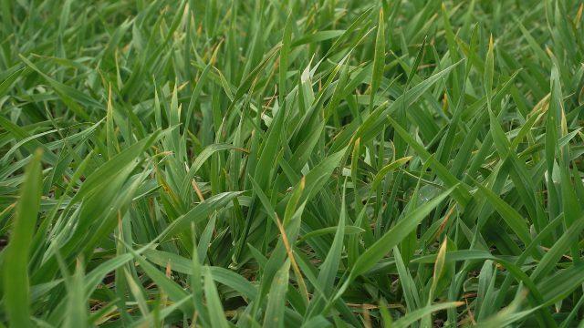 Crop establishment – there is no room for error